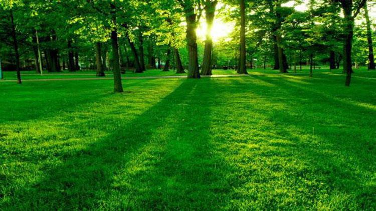 5張綠色森林PPT背景圖片